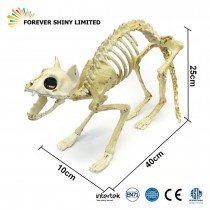 40cm Skeleton Cat