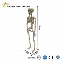 38cmSkeleton Human